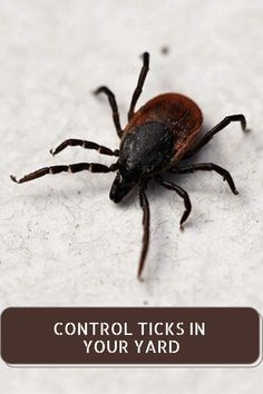 Preventing the yards from the effect of the ticks is possible through bug and tick sprays which act as repellents. Spraying the ticks in the yard is the ideal way to keep the family and the yard protected. Termite Pest Control, Tick Spray, Ticks, Sprays, Yards, Yard, House Gardens
