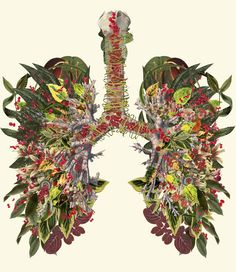 """""""inhale"""" anatomical collage art by bedelgeuseCommission for the Wellcome Trusthttp://www.wellcome.ac.uk"""