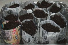 Newspaper Pots for seed starting indoors.