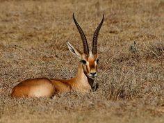 Yawal Wildlife Sanctuary - in Yawal, Maharashtra, India