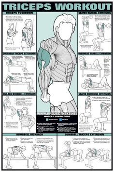 Triceps Workout for Men - Barbell Dumbbell Seated Exercise Gym