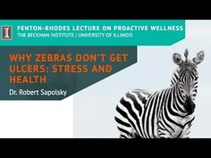 """""""Why Zebras Don't Get Ulcers: Stress and Health"""" by Dr. Coping With Stress, Stress Less, Stress And Anxiety, Stress And Health, Science Facts, Human Mind, Public Relations, Zebras, Love And Marriage"""