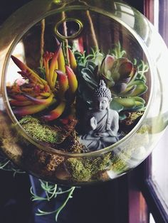 Plants have to be in the perfect atmosphere in order that they can grow well. Air plants don't require soil, so a lovely frame can likewise be utilised to make an amazing air plant decoration. Mini Terrarium, Succulent Terrarium, Succulents Garden, Terrarium Ideas, Succulent Ideas, Garden Terrarium, Hanging Terrarium, Glass Terrarium, Air Plants