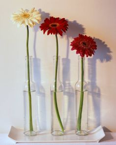 beer bottle centerpiece with gerbera daisys