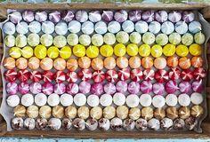 meringue #coloreveryday