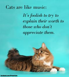 Cats are like music: it's foolish to try to explain their worth to those who don't appreciate them.