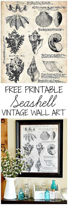 Add gorgeous vintage charm to your home with this beautiful (and big!) Free Printable Seashell Botanical print!