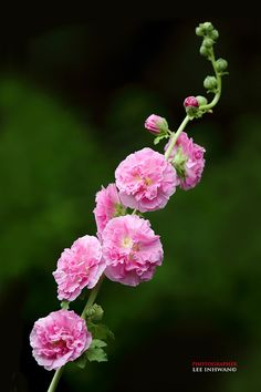 50 Pictures of Pretty Flowers | Cuded