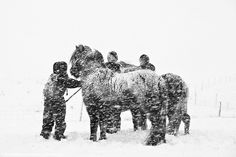 Farmers gathering horses in a snowstorm, south Iceland by skarpi - www.skarpi.is, via Flickr