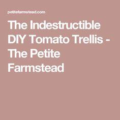 The Indestructible DIY Tomato Trellis - The Petite Farmstead