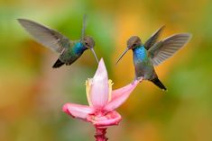 There's something magical about hummingbirds flitting around the garden! In this article, you'll learn how to attract hummingbirds and butterflies to your yard. World Birds, All Birds, How To Attract Birds, How To Attract Hummingbirds, Images Colibri, Hydroponic Farming, Diy Hydroponics, Humming Bird Feeders, Humming Birds