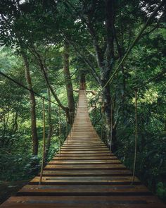 #ForestFriday A forest is a special place. Tag friends in the comments below that you'd cross the bridge with. . . . : Thailand : @merveceranphoto #NatureNestd #Nature #Earth #Plants #Wilderness #Natural #Hike #Hiking #Landscape #Thailand #Explore #Adventure