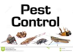 iPest Control Melbourne, we understand that our clients want their homes or businesses free from any pests or vermin and the discomfort associated with them. We offer the best pest management practices and fumigation services to solve the problem now and in the future. Our services are fast, reliable and very efficient with minimal fuss if any at all.