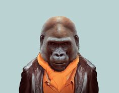 Western Lowland Gorilla (Gorilla Gorilla Gorilla) Zoo Portraits by Yago Partal