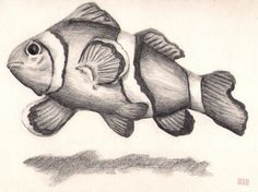 Image result for tropical fish pencil drawing