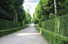 If you are looking for privacy fence ideas, then you have come to the right place. Through this article we will take a look at some ideas for privacy fence and how you can choose the right fencing for your home. Natural Privacy Fences, Yard Privacy, Privacy Hedge, Natural Fence, Driveway Landscaping, Courtyard Landscaping, Outdoor Privacy, Backyard Fences, Front Yard Hedges