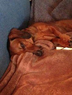 Tired Gabby Gurl