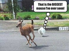 animal humor pictures | Animal Humor cat & deer funny