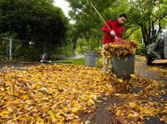 43++ Leaf clean up services near me information