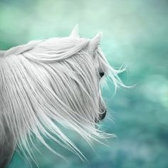 Fantasy art, surreal horse photo, magical, nursery art, girls wall decor, green, mint, teal, aqua