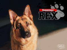 """""""Kommissar Rex"""" (1994-2008) Creators: Peter Hajek, Peter Moser Stars: Gerhard Zemann, Heinz Weixelbraun, Wolf Bachofner"""