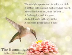 Discover and share Hummingbird Quotes And Sayings. Explore our collection of motivational and famous quotes by authors you know and love. Hummingbird Quotes, Hummingbird Symbolism, Hummingbird House, Hummingbird Plants, Hummingbird Meaning, Bird Poems, Bird Barn, Barn Owls, Animal Spirit Guides