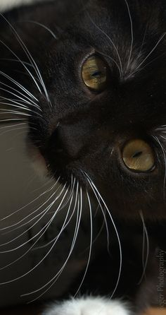Beautiful Whiskers~ Black cat so cute. I like the whiskers. Black cats are awesome.