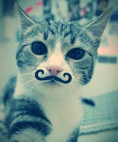 Do you like my mustash?