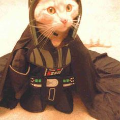 Halloween Pet Costumes - Contest for the Best Halloween Pet Costumes - Good Housekeeping