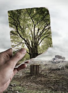 I think of deforestation in this picture because it shows how the tree looked before and now after it was burnt or torn down. I think this picture is also creative.