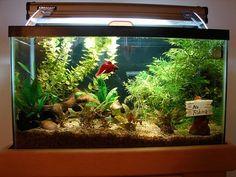 51 Best Fish Tank Ideas Images Fish Tanks Aquarium Aquariums