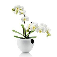 Orkidepotte - Kitchn.no