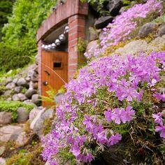 Good morning! Pikkuhiljaa taitaa sade väistyä pikkukylänkin yltä ja kesä saa vallan 😍 #kesä2017 #maakellari #kotipiha #puutarhassa #kivikkokasvit #aikainenaamuherätys #kesätunnelmaa #garden #gardenlife