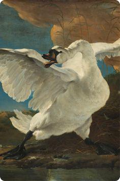 Bird Illustration, Holland, Birds, Paintings, Watercolors, Atelier, Baroque, Novelty Signs, Netherlands