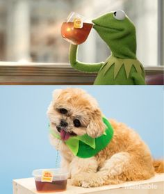 The Biggest Memes of 2014 Made Even Better by Marnie the Dog