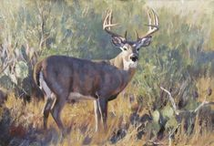 Collection of archived paintings by Brian Grimm held in private and public collections. Wildlife Paintings, Wildlife Art, Deer Paintings, Deer Art, Moose Art, Whitetail Deer Pictures, Grimm, Giclee Print, Beast