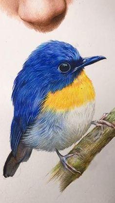 Bird Painting Acrylic, Pencil Painting, Watercolor Bird, Bird Pencil Drawing, Bird Drawings, Animal Drawings, Colored Pencil Artwork, Color Pencil Art, Vogel Illustration