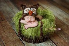 Owl in a nest!!!! Ahhhhh!!!
