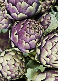 It was once believed that artichokes were for gourmets and had miraculous properties – for example, a woman who ate artichokes would give birth to boys.  In 17th-century Polish cuisine, artichokes were served with stewed meat, fish, or pate, though it must be said that staunch Samaritans were not impressed – they preferred bigos, photo: Marcin Kielbiewski/East News