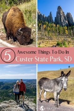 States In America, 50 States, South Dakota Vacation, Custer State Park, Short Vacation, Us Road Trip, Travel Oklahoma, Thailand Travel, Travel Usa