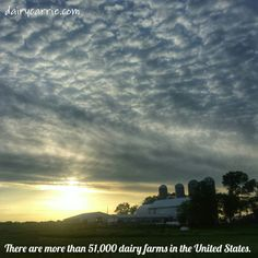 How many dairy farms are there?