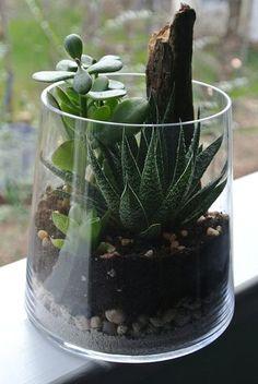 Jaded Greenes Terrarium Succulent Terrarium por theZenSucculent