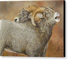 Painting of a pair of Bighorn Sheep voicing his conquest. Title: The Conquest - Bighorn Sheep is an original oil painting by Johanna Lerwick Wildlife/Nature Artist. Several size prints available. Sheep Paintings, Nature Paintings, Oil Paintings, Original Art, Original Paintings, Sheep Art, Canvas Art, Canvas Prints, Realism Art