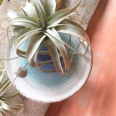Annnd it feels like spring in Chicago. I wish we were getting those extra hours of sunlight thou so the plant friends would kick it into high gear- they all got new planters in the last couple months- and ill be posting a couple new designs this week! . . . #instagood #pottersofinstagram #beachdecor #interiors #contemporaryceramics #pottery #airplants #xenographica #madetocreate #bohemianlife #chicagoart #bohostyle #madeinchicago #etsymudteam #etsy #createmakeshare #plantlove #airplantholder