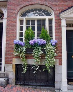 Nine & Sixteen: Summer Window Boxes  Hydrangeas + Ivy