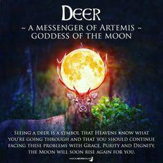 A Messenger of Artemis, Goddess Of The Moon Animal Meanings, Animal Symbolism, Animal Spirit Guides, Spirit Animal, Wicca Witchcraft, Wiccan, Magick Spells, Artemis Goddess, Spiritus
