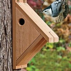 Nuthatch box