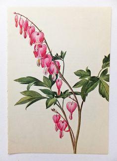 52 Best Ideas For Tattoo Heart Flower Draw Bleeding Heart Tattoo, Bleeding Heart Flower, Bleeding Hearts, Botanical Tattoo, Botanical Drawings, Botanical Prints, Heart Flower Tattoo, Flower Tattoos, Vintage Flowers