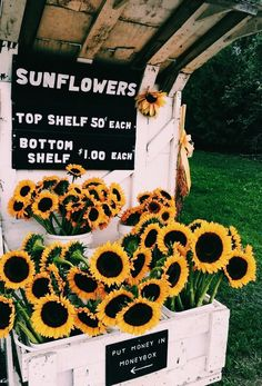 Ideas for flowers photography wallpaper summer sun Hawke Dragon Age, Happy Vibes, Summer Aesthetic, Happy Colors, Mellow Yellow, Wall Collage, Summer Vibes, Summer Sun, Aesthetic Wallpapers