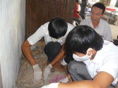 Dịch vụ diệt mối chất lượng nhất tại quận Phú Nhuận